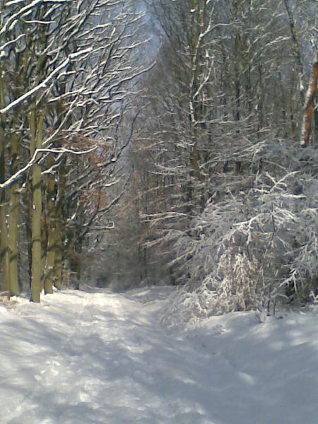 Winterlandschaft Taunus